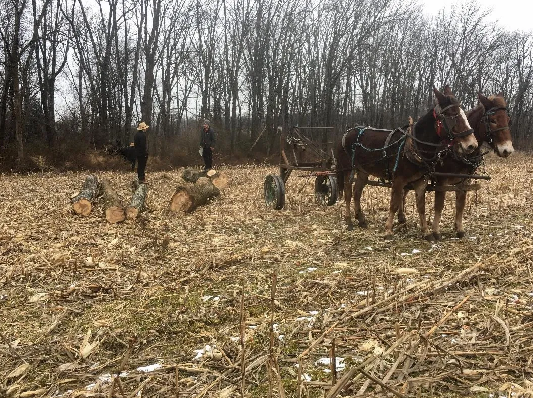 logging with mules