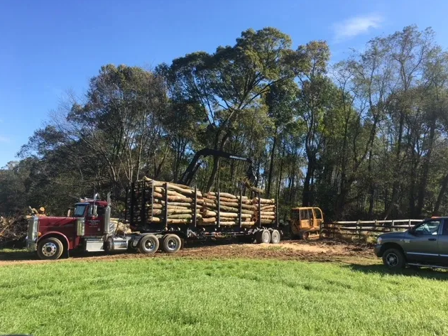 logging truck getting loaded with logs