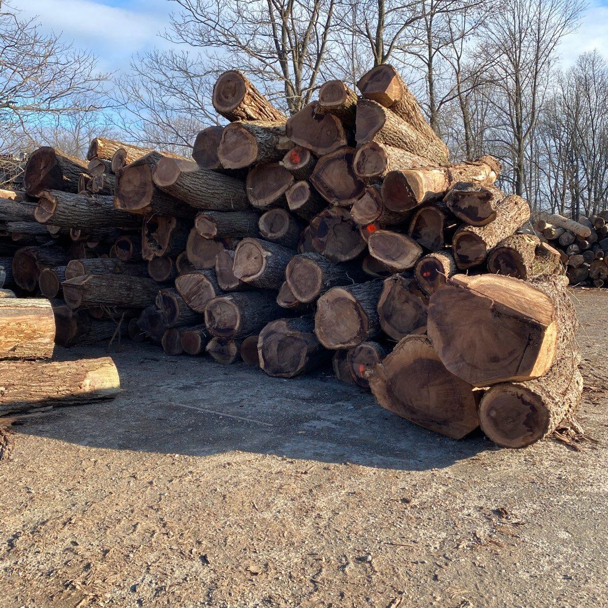 walnut logs in logyard